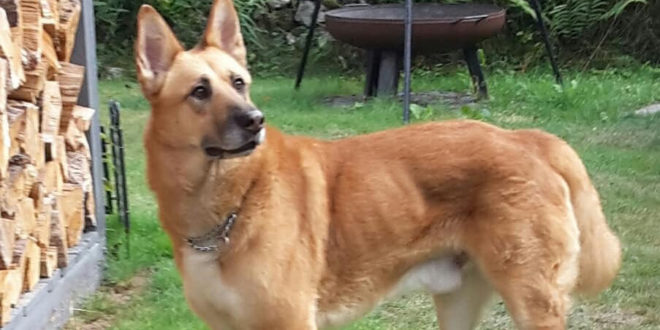 La Canera de la Mancomunitat aconsegueix l'adopció de 302 gossos