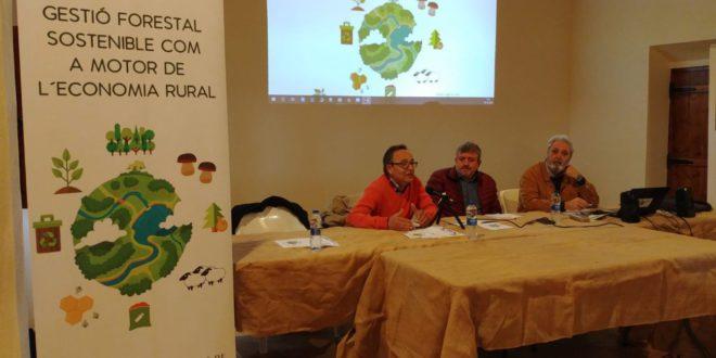 Diputació promou la gestió forestal sostenible per dinamitzar l'economia de la Vall d'Albaida