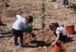 """Prop de 300 persones planten arbres a Ontinyent amb l'activitat """"Apadrina'm, creixem junts"""""""