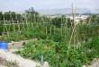 Una Oficina de Dinamització Agrícola impulsarà l'aprofitament del Banc de Terres
