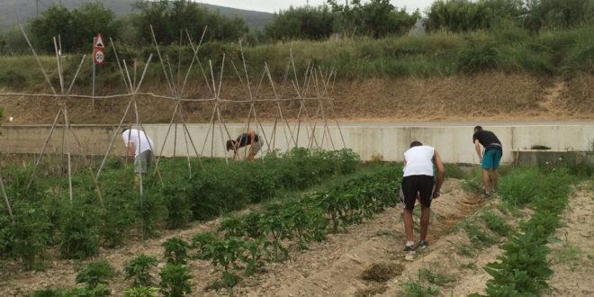 La Diputació promou la creació d'horts socials municipals i bancs de terres