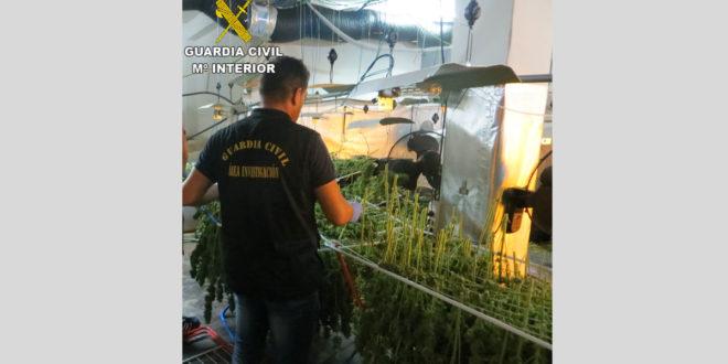 La Guàrdia Civil incauta quasi 2.000 plantes de marihuana en una nau industrial d'Albaida
