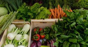 El Mercat Agroecològic de Carrícola com a exemple d'èxit a les Jornades Agroecològiques de Godella