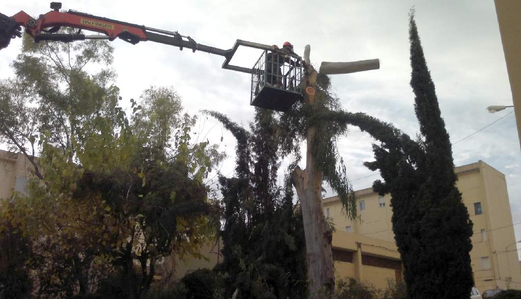 l ajuntament d ontinyent tala un arbre de 15 metres d alt que obstru a el clavegueram tv. Black Bedroom Furniture Sets. Home Design Ideas